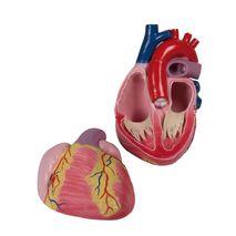 Πολύ μεγάλο μοντέλο καρδιάς - 3 φορές το πραγματικό μέγεθος - 2 μέρη