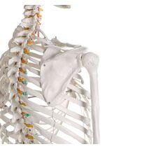 """Διδακτικός Σκελετός """"OSCAR"""""""