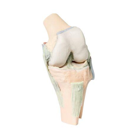 Άρθρωση του γόνατος σε κάμψη